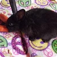 Adopt A Pet :: Shane - Kenosha, WI