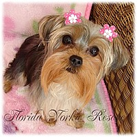 Adopt A Pet :: Molly - Palm City, FL