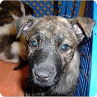 Adopt A Pet :: Treasure - No.Charleston, SC