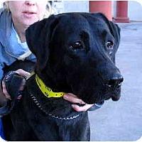 Adopt A Pet :: Othella PENDING - Scottsdale, AZ