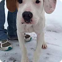 Adopt A Pet :: Rocky - North Olmsted, OH