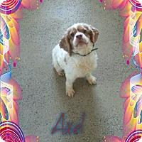 Adopt A Pet :: Axel - Lawrenceville, GA