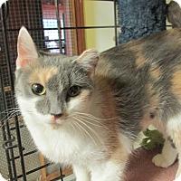 Adopt A Pet :: ADDISON - Acme, PA