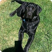 Adopt A Pet :: Franklin - Winters, CA