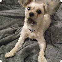 Adopt A Pet :: Coco - Foster, RI