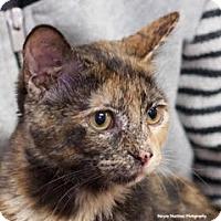 Adopt A Pet :: Daisy B - Homewood, AL