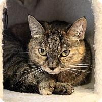 Adopt A Pet :: Alex - Sarasota, FL