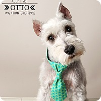 Adopt A Pet :: Otto-Pending Adoption - Omaha, NE