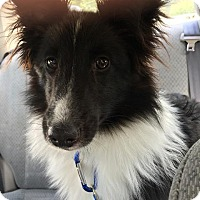 Adopt A Pet :: Coco - Leonardtown, MD