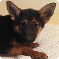 Adopt A Pet :: Nadia - Boston, MA