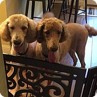 Adopt A Pet :: JoJo Williams - Fresno, CA