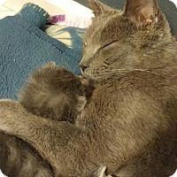 Adopt A Pet :: Lucy *Petsmart GB* - Appleton, WI