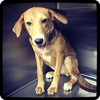 Adopt A Pet :: Harlyn - Grand Bay, AL