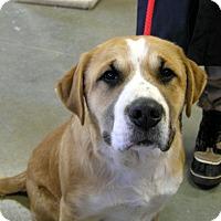 Adopt A Pet :: Benard - Creston, BC