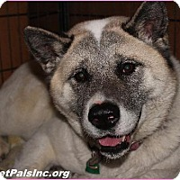 Adopt A Pet :: BEAUTIFUL Tosha - Hawk Springs, WY