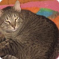 Adopt A Pet :: Juicy - Newtown, CT
