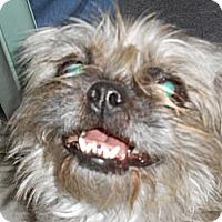 Adopt A Pet :: Dori - Lockhart, TX