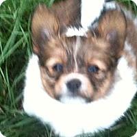 Adopt A Pet :: Rainey - Hilliard, OH