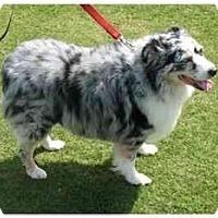 Adopt A Pet :: Cassie - Orlando, FL