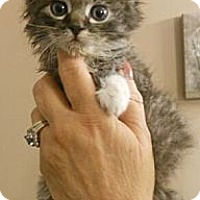 Adopt A Pet :: Rocky - Reston, VA