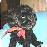 Adopt A Pet :: Judson - Mooy, AL