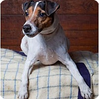 Adopt A Pet :: Indy - Rhinebeck, NY