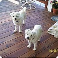 Adopt A Pet :: Bonnie - Alliance, NE