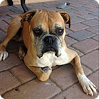 Adopt A Pet :: Scooby - Scottsdale, AZ