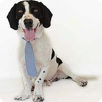 Adopt A Pet :: Aiden - Orlando, FL
