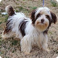 Adopt A Pet :: *Zander - PENDING - Westport, CT