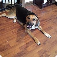 Adopt A Pet :: Sasha - Hamburg, PA