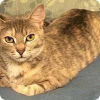 Adopt A Pet :: Paris-STUNNING! - Hadley, MI