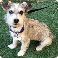 Adopt A Pet :: Pinky - Redondo Beach, CA