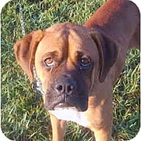 Adopt A Pet :: Toby - Brentwood, TN