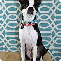 Adopt A Pet :: Lulu - Starkville, MS