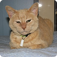 Domestic Shorthair Cat for adoption in New Richmond,, Wisconsin - Mellie