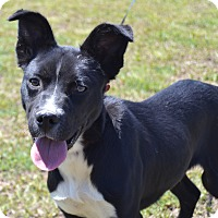 Adopt A Pet :: Bootsy - Larned, KS