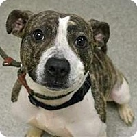 Adopt A Pet :: Khloe - Troy, MI