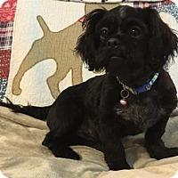Adopt A Pet :: Inky - Mobile, AL