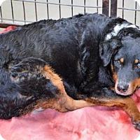 Adopt A Pet :: Mystic - San Jacinto, CA