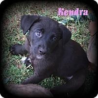 Adopt A Pet :: Kendra - Denver, NC