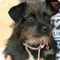 Adopt A Pet :: Olive - Palmdale, CA