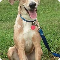 Adopt A Pet :: Brady - Paris, IL