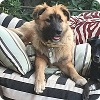 Adopt A Pet :: NORA - Los Angeles, CA