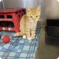 Adopt A Pet :: Rhubarb - Sauk Rapids, MN