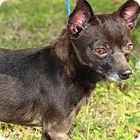 Adopt A Pet :: Ricky - Brownsville, TX