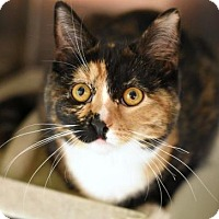 Adopt A Pet :: Holly - Philadelphia, PA