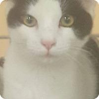 Adopt A Pet :: Doogie - Griffin, GA