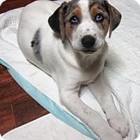 Adopt A Pet :: Polar Bear * ADOPTED * - Waterbury, CT