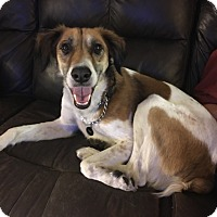 Adopt A Pet :: Tyson - Holiday, FL